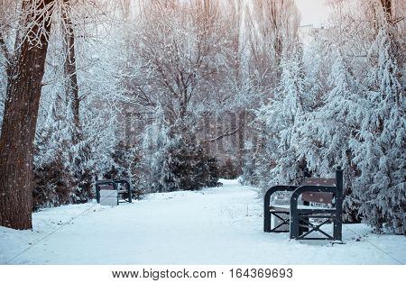 Winter landscape with falling snowflakes, benches covered with snow among frosty winter trees. Red benches in a park covered with snow. Lonely bench, snow-covered trees in the city park. Sunset.