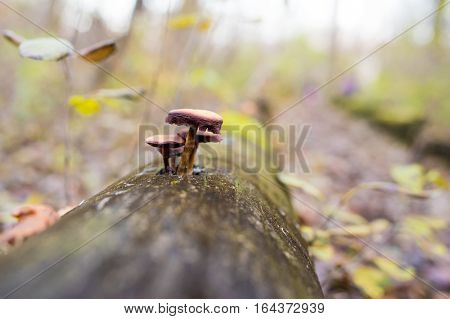 Mushroom grown on tree in natural light