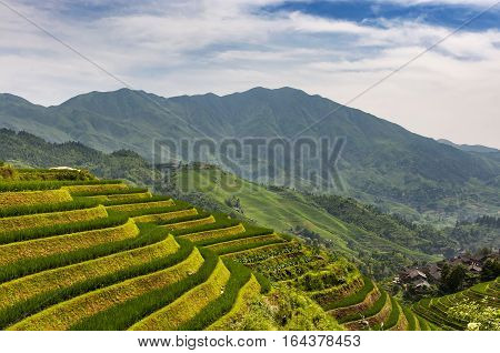 View of the Longsheng Rice Terraces (Dragon's Backbone Rice Terraces) in Guangxi China.
