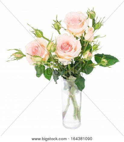 Pink blooming fresh roses with buds posy isolated on white background