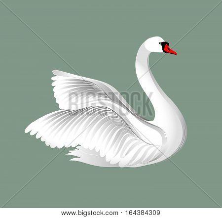 White bird isolated over grey background. Swans illustration.