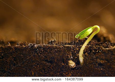 Growing Plant. Green Sprout Growing From Seed.