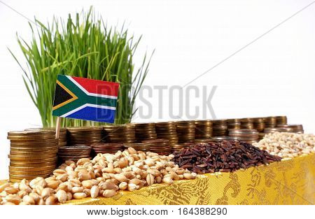 South Africa Flag Waving With Stack Of Money Coins And Piles Of Wheat And Rice Seeds