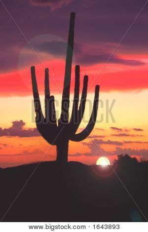 Saguaro Sunset Against A Salmon Colored Sky