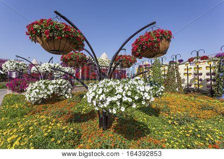 DUBAI UAE - NOV 27 2016: Millions of Flowers at the Miracle Garden in Dubai. United Arab Emirates Middle East