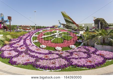 DUBAI UAE - NOV 27 2016: Millions of Flowers at the Miracle Garden in Dubai. United Arab Emirates Middle East