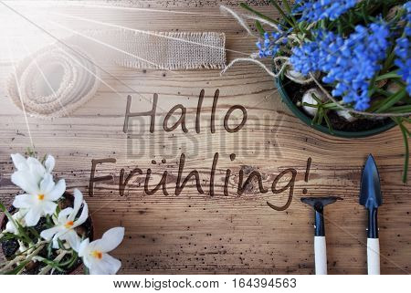 German Text Hallo Fruheling Means Hello Spring. Sunny Spring Flowers Like Grape Hyacinth And Crocus. Gardening Tools Like Rake And Shovel. Hemp Fabric Ribbon. Aged Wooden Background