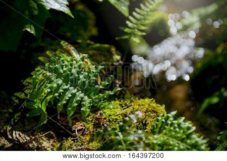 Fern leaf. Fern leaves foliage in the forest
