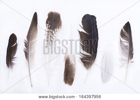 Row of the various feathers isolated on white background