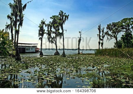 A large lake with trees and lilies