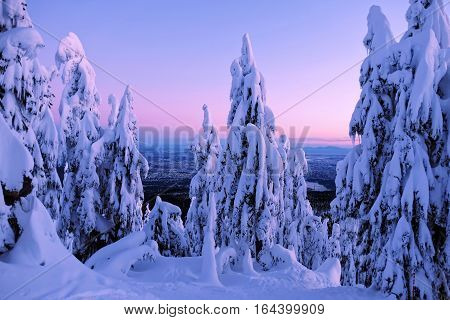 Winter fairytale at sunrise. Cypress Mountain Park. North Vancouver. British Columbia. Canada.