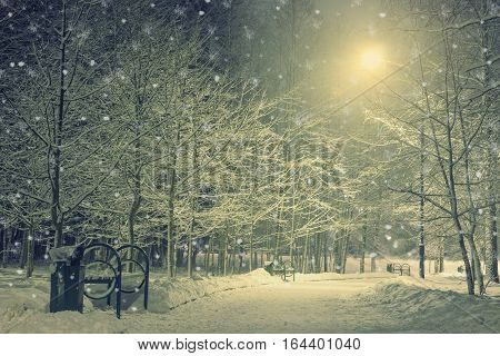 Winter in the night park. Landscape with frosty deciduous tree. Beutiful background landscape.