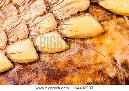 Armadillo Skin Detail