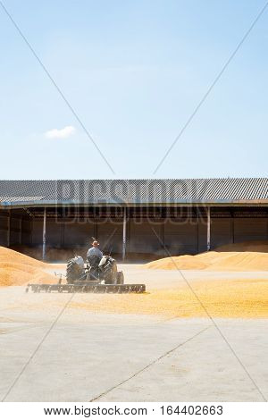 December 18 2016. A Thai farmer uses a tractor to spread out corn kernels on a concrete floor for drying and processing into cornmeal. Agriculture and industry concept.