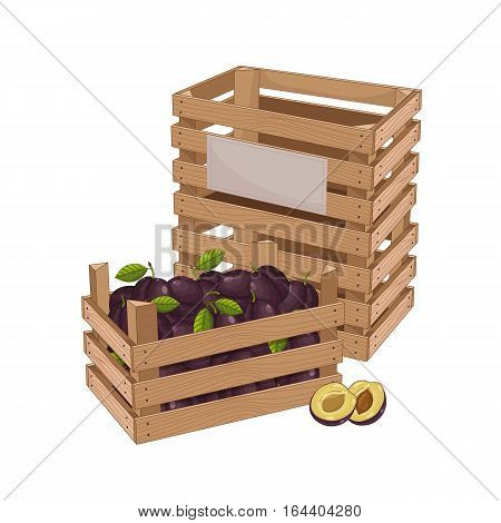 Wooden box full of plum isolated on white background vector illustration. Fresh fruit, organic farming, vegan food, delivery farm product, grocery store concept. Ripe purple plum in wooden crate icon.