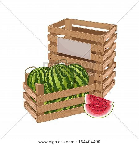 Wooden box full of watermelon isolated on white background vector illustration. Fresh fruit, organic farming, vegan food, delivery farm product, grocery store. Ripe watermelon in wooden crate icon.