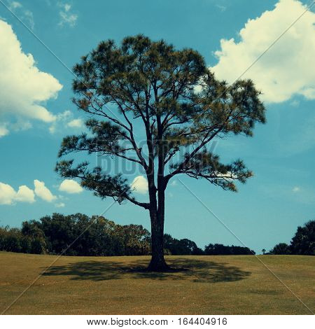 A lone tree at the edge of a field, with other trees and bushes off in the distance. White clouds scattered throughout the blue sky in the background complete the scenery. The original photo I took has been altered slightly to create a more vintage look.
