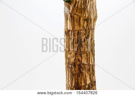 Photograph of a plant trunk detail and white background