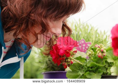 Gardening nature concept. Woman smelling little red flowers roses in pot