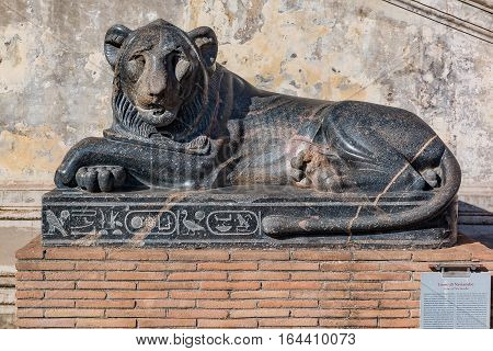 Ancient Egyptian Sculpture Of Lion Of Nectanebo At The Vatican Museum