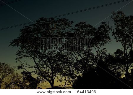 Silhouette of several trees at sunrise in countryside