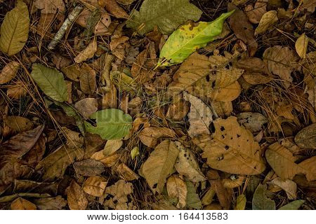 Dried leaves lying on the floor in different colors