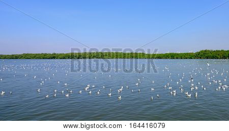 swarm of sea gulls flying close to the beach of an island thailand