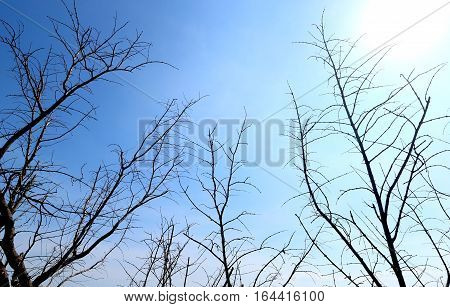 dead trees with bule sky background in daytime