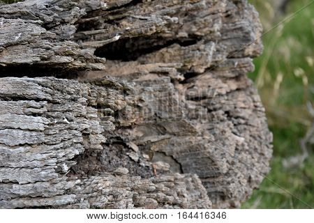 Dry tree trunk with many cracks. Close up of old aged weathered cracked wood profile surface texture log old wood texture of dried. Texture of the logs.