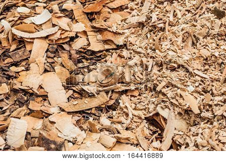 Pile of Wood Flakes with Dragonfly Background/ Texture