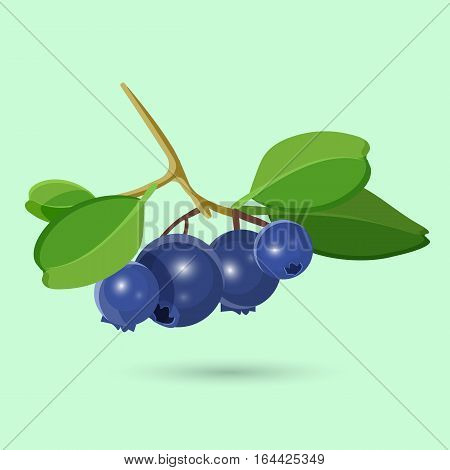 Blueberry with green leaf isolated on white. Blueberries perennial flowering plants with indigo-colored berries including cranberries, bilberries and grouseberries. Botanical vector illustration