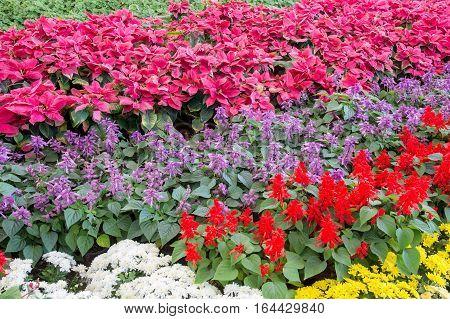 Beautiful color of flower in thr garen