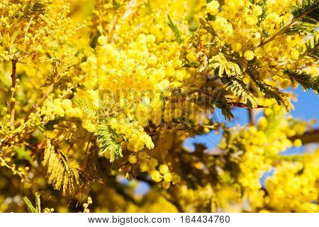 In  Wildlife  Mimosa  Plant And Tree