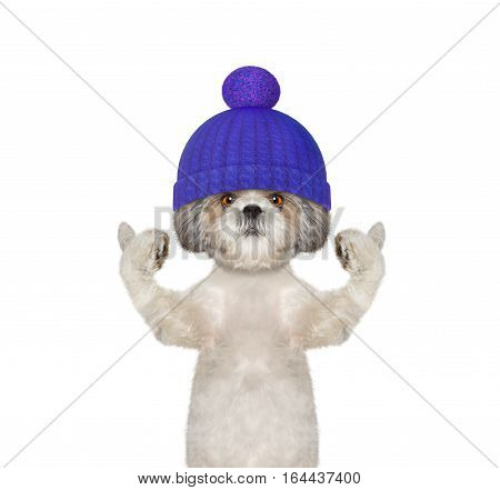 winter dog in a wool hat -- isolated on white