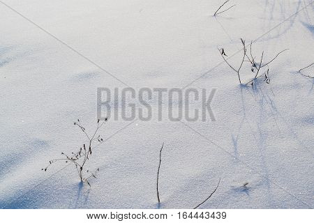 Snow texture background. Grass makes its way from under the snow