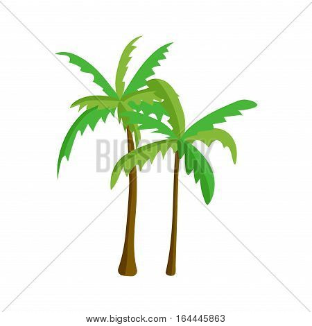 Green coconut palm icon isolated on white background. Vector summer tree plant nature and tropical nature exotic coconut herb.