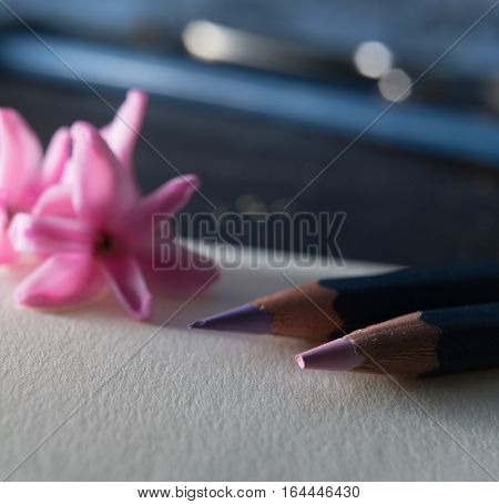 Spring . pencils and pink hyacinth flower on white paper. close-up