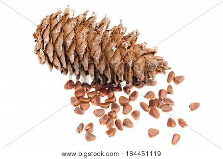 cedar pine cone nut on a white background vitamin food health
