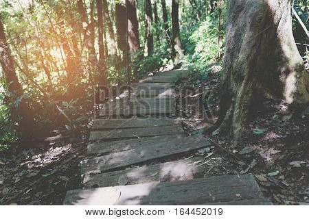 Walkway In Forest At Kew Mae Pan Nature Trail (doi Inthanon National Park) In Chiangmai,thailand