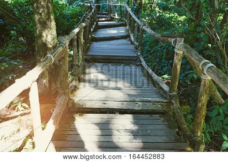 Rain Forest Walk Way In Ang Ka Nature Trail Located In Doi Inthanon National Park, The Highest Peak