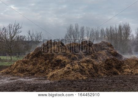 Hot horse manure smoking pile in the mud