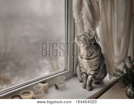 Cute kitten sitting on the window and looking on the winter landscape
