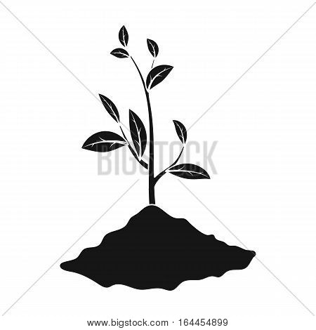 Sprout icon in black design isolated on white background. Bio and ecology symbol stock vector illustration.