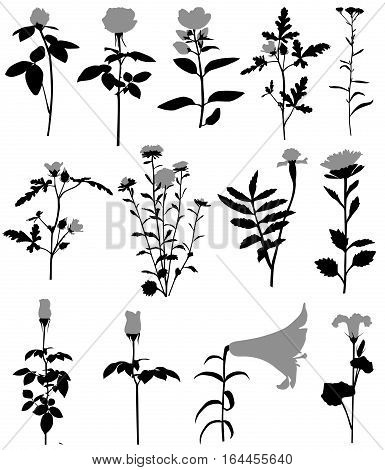Collection of silhouettes of different species of flowers