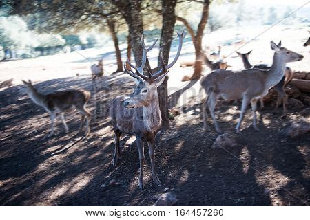 Photo of young deer in the park