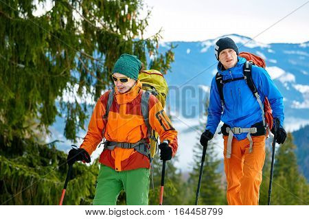 hikers with backpack on the trail in the Carpathians mountains at winter. hikers standing near large spruce leaning on trekking pole. the weather is overcast, distant bluish mountains in the background. Travel and vacation concept