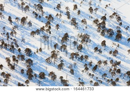 Aerial view of the sparse growth of trees in winter evening.