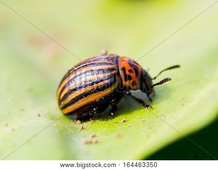 Beetle sitting on a green leaf photo for you