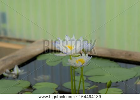 Beautรful lotus in the bowl and leaf