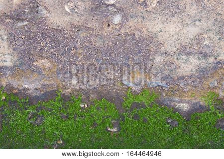 The dirty texture of sand wall with green lichen background